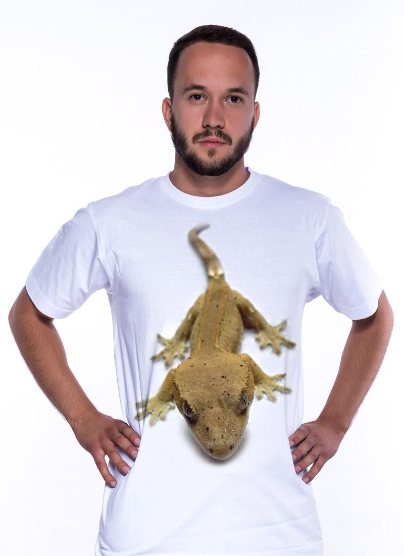 Gekon - Tulzo