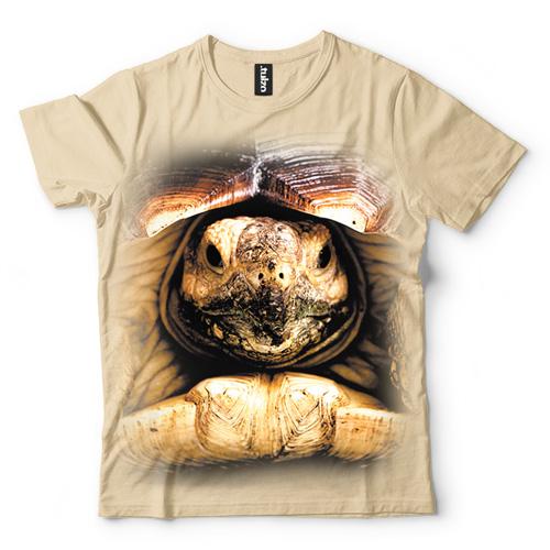 Żółw - Tulzo