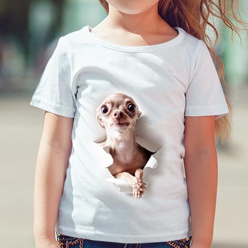 Chihuahua - Tulzo