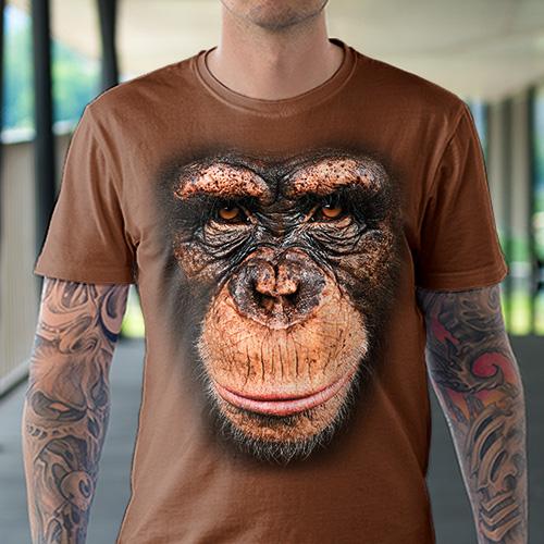 Szympans - Tulzo