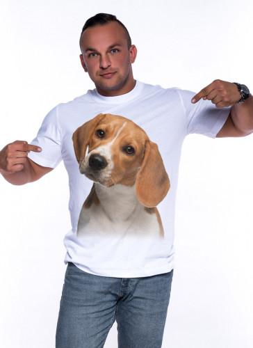 Szczeniak Beagle - Tulzo