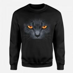Zły Kot - Tulzo