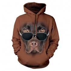 Labrador czekoladowy w okularach - Tulzo