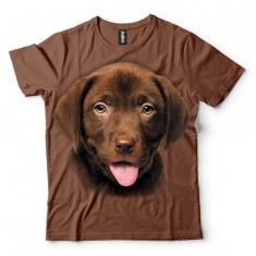 Labrador szczeniak czekoladowy - Tulzo